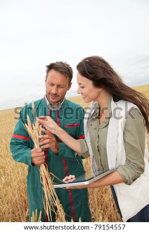 Agronomist with farmer looking at wheat ears - stock photo