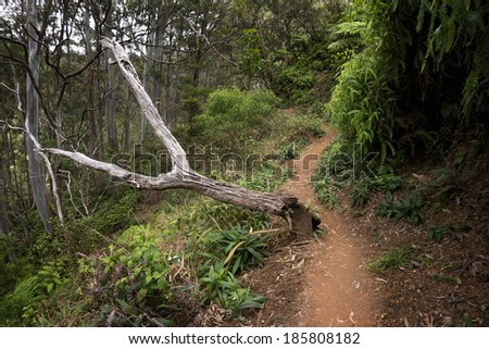 Aiea Ridge Loop hiking trail, island of Oahu, Hawaii - stock photo