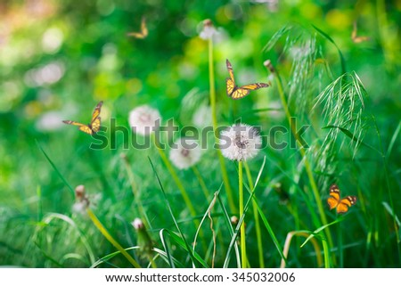 Air dandelions on a green field. Spring background. - stock photo