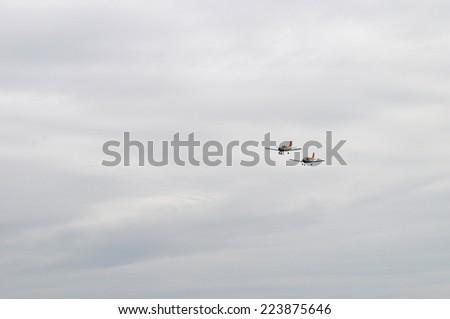 Aircraft flying - stock photo