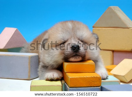 Akita dog - puppy sleep on children blocks - stock photo