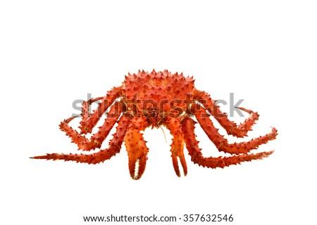 Alaska Crab big isolated on white background . - stock photo