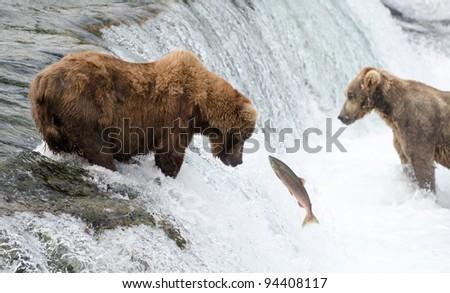 Alaskan brown bear fishing for salmon at Brooks Falls in Katmai National Park - stock photo