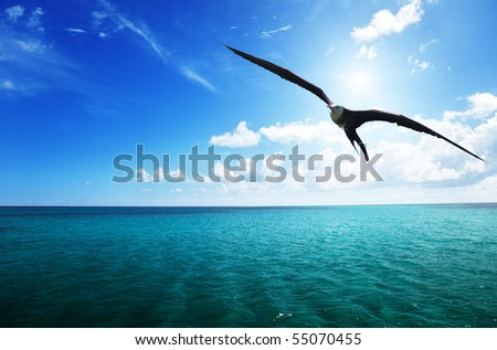 albatross and caribbean sea - stock photo