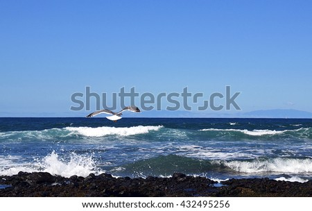 Albatross flying over ocean waves in Tenerife,Canary Islands,Spain.