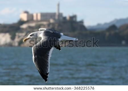 Alcatraz in San Francisco, California, USA - stock photo