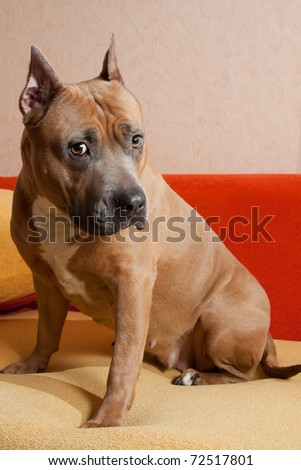 Alertness - stock photo