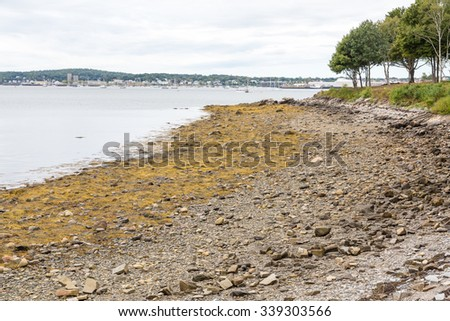 Algae and kelp near tidal pools during low tide on New England coast - stock photo