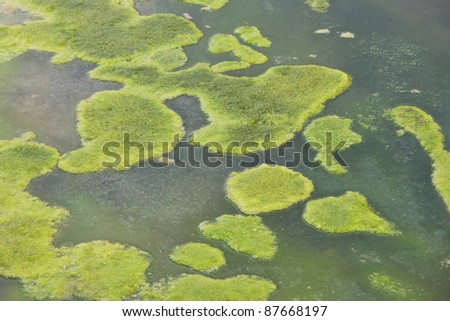 Algae floating in polluted water - stock photo