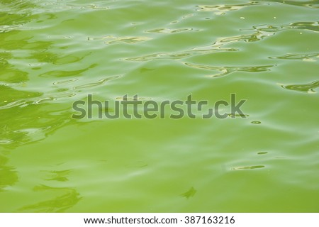Algae in a water basin of freshwater. Manica, Mozambique, Africa, East Africa - stock photo
