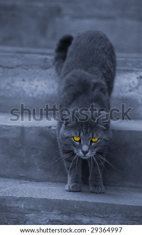 alley cat with hypnotizing eyes - stock photo