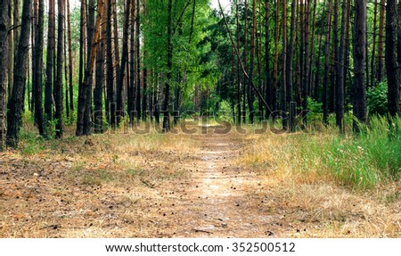 Alley footpath in the pine forest bright background - stock photo