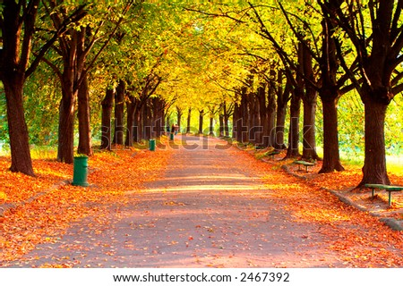 Alley in the park -  Best for web use - - stock photo