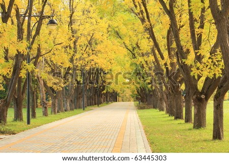 Alley in the park in autumn - stock photo