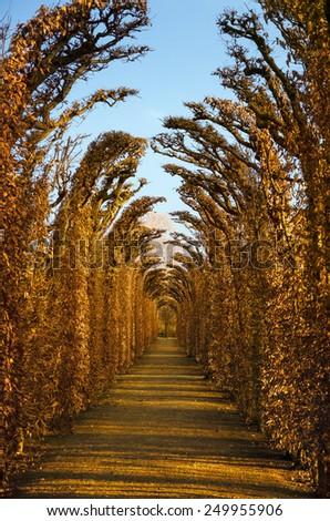 Alley In The Park. Vienna, Austria - stock photo