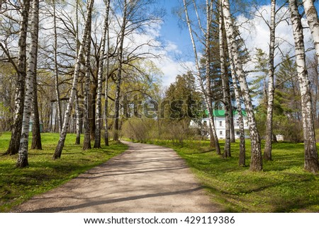 Alley of birches in Yasnaya Polyana