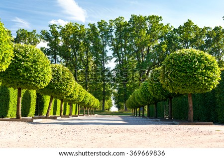 Alley of topiary green trees with hedge on background in ornamental garden on a blue sky background in Rundale royal park. Latvia. Vibrant summertime outdoors horizontal image. - stock photo