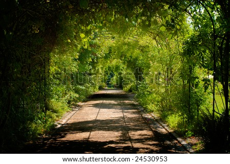 Alley of tree in spring, ornamental garden - stock photo