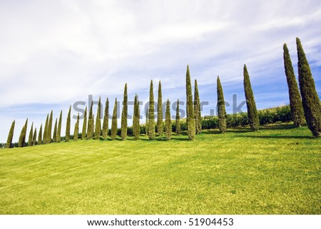 Alligned beatiful green cypress trees under blue sky in Chianti, Tuscany, Italy