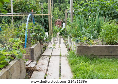 Allotment garden path - stock photo