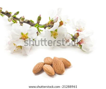 Almond flowers and nuts on a white - stock photo