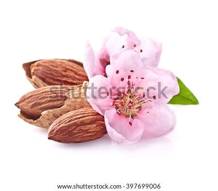 Almonds nuts with pink flowers - stock photo