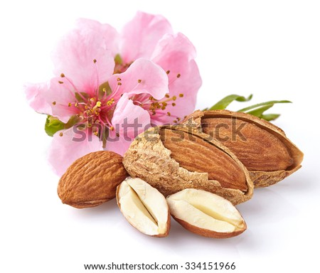 Almonds with pink flowers - stock photo