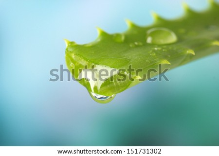 Aloe leaf with drop on natural background - stock photo