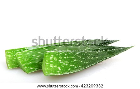 Aloe plant isolated on white.