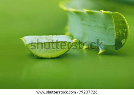 Aloe vera leaves on a green background - stock photo