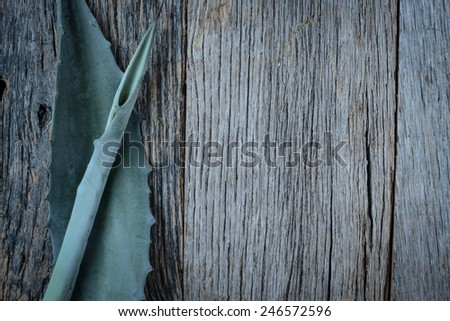 Aloe Vera Leaves on Wood Background - stock photo