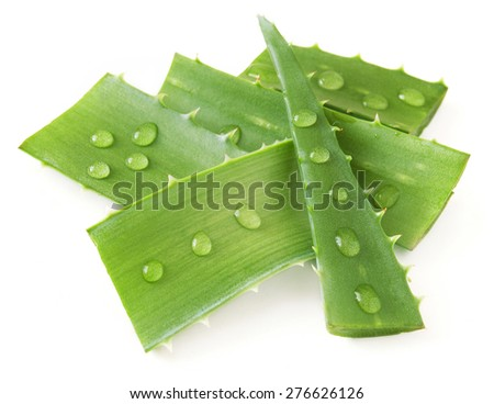 Aloe Vera leaves with water drops isolated on white background - stock photo