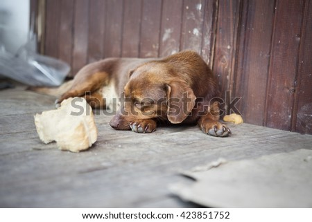 Alone and abandoned sleeping dog - stock photo