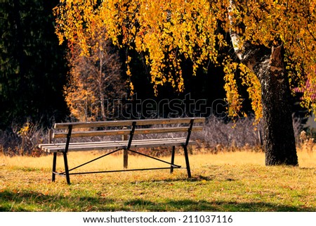 alone bench in the autumn park, sunset golden light  - stock photo