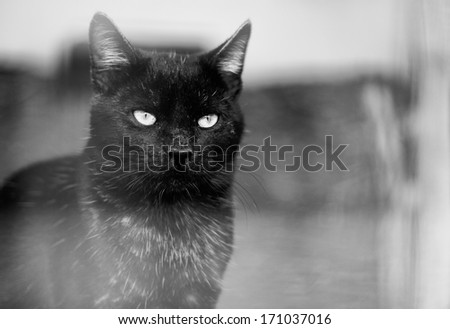 Alone Cat - stock photo