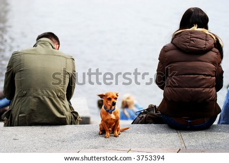 alone dog between a couple - stock photo