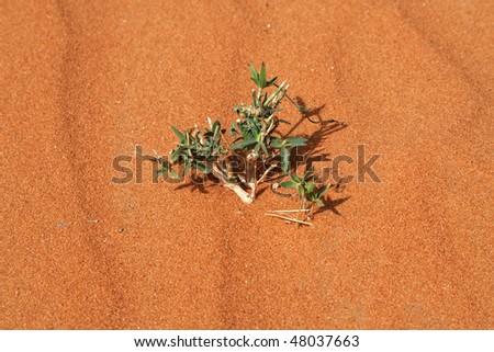 """Alone """"flower"""" n the desert - stock photo"""