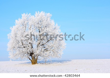 Alone frozen tree