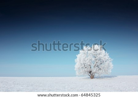 Alone frozen tree and clear blue deep sky