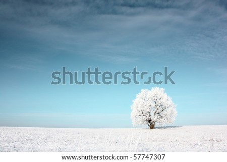 Alone frozen tree in snowy field - stock photo