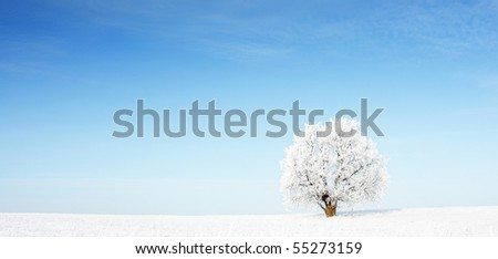 Alone frozen tree in snowy field and clear blue sky - stock photo
