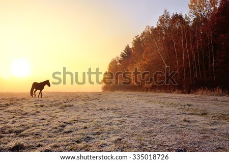 Alone horse on autumn morning meadow, during wonderful misty calm morning, near by forest full of colored trees - stock photo