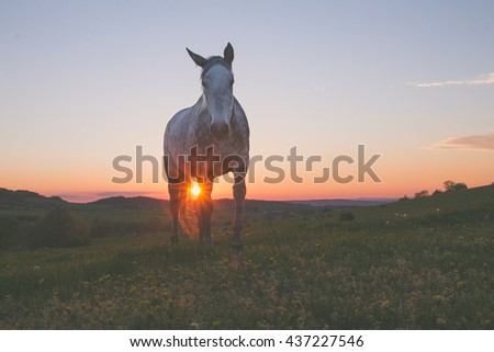 alone horse on meadow in sunset - stock photo