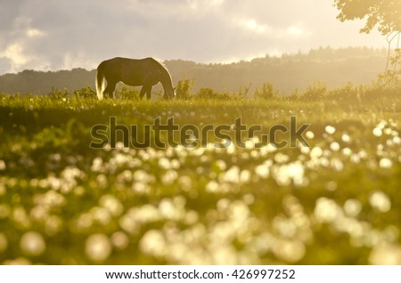 Alone horse on the meadow in the last light of calm colorful spring sunset - stock photo