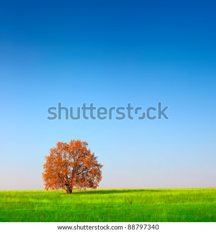 Alone red autumn tree on a green meadow - stock photo
