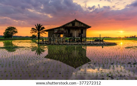 Alone reflection house on paddy field during sunset