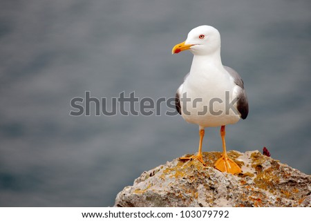 alone seagull perched on a rock - stock photo