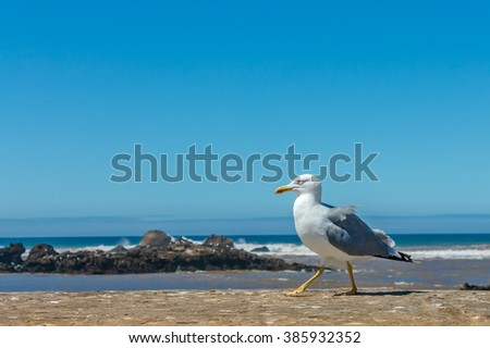 Alone seagull perched on a wall - stock photo