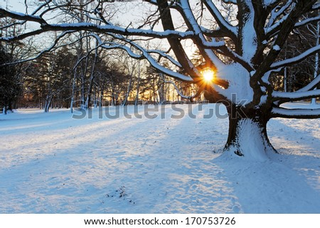 Alone tree in a nice winter park. - stock photo