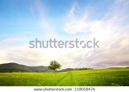 alone tree in clear green and blue nature landscape - stock photo